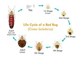 Download Bed Bug Insect Bites On Babies Background