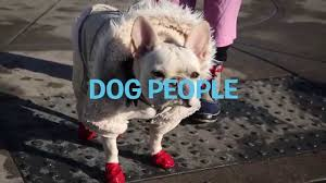 Sometimes There Is Poop And It Must Be Picked Up | DOG PEOPLE - YouTube