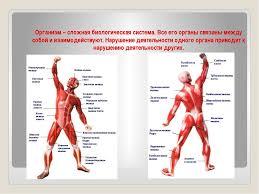 Презентация по физической культуре на тему Социально  слайда 5 Организм сложная биологическая система Все его органы связаны между собой