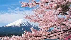 Bunga Sakura Mulai Tahun Depan Warga Bisa Menikmati Keindahan Bunga