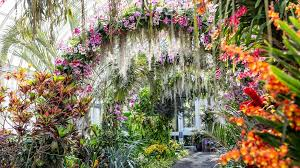 photos singapore s treasures star in ny botanical garden s 2019 orchid show metro us