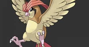 Pidgey Evolution Chart Fire Red Pokemon Lets Go Pidgeotto Stats Moves Evolution