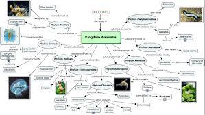 Animal Phylum Characteristics Chart