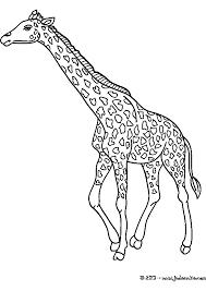 Dessins Colorier Coloriage Girafe Imprimer Prefix Tete X Dessin En