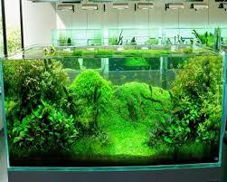 Amazing Aquarium Design Amazing Planted Aquarium Designs Design And Ideas