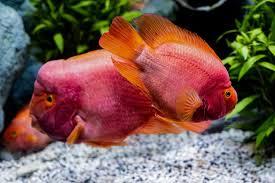 best fish for 75 gallon tank 2021