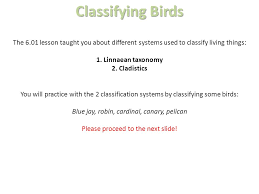 Blue Jay Robin Cardinal Finch And Pelican Taxonomy Chart 06 01 Classification Project Ppt Video Online Download