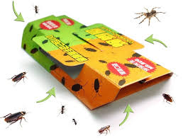 How To Get Rid Of Roaches Naturally 10 Creative Solutions That Work