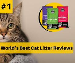 Cat Litter Comparison Chart Worlds Best Cat Litter Brand Reviews In 2019 Catthink