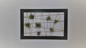 Air Plant Display Diy How To Make An Air Plant Display Frame Youtube