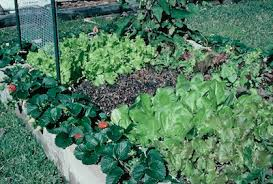how to make a raised garden. Building Raised Garden Beds With Concrete Cinder Blocks How To Make A