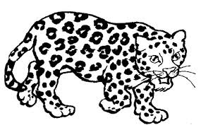Small Picture Baby Jaguar Coloring Pages Free Coloring Pages