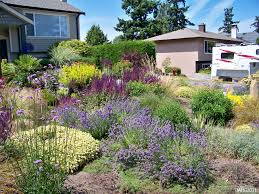 5 drought tolerant plants for your yard