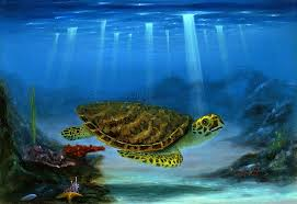 myrtle the turtle wall art on turtle wall art painting with myrtle the turtle wall art thomas deir honolulu hi artist