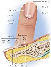 mees lines fingernails causes symptoms
