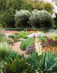Small Picture 107 best Xeriscaping images on Pinterest Landscaping Plants and