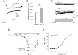 gdf enhances intracellular ca by increasing cav expression  results