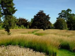 Small Picture 94 best Grasses images on Pinterest Ornamental grasses