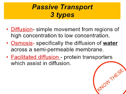 3 Types Of Passive Transport 2 4 Cell Membrane And Transport