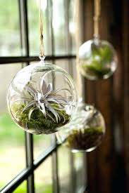 home glass hanging planters nz pack of 3 air plant terrariums decorative pots flower containers