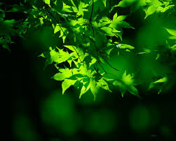 Download Natural Green Wallpaper For ...