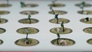Hydroponic Kitchen Garden Indoor Gardening With Hydroponics Youtube