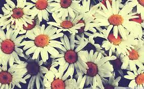 Vintage Flowers Wallpaper Hd