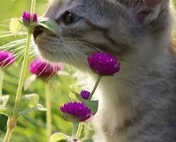 Lustige Katzen Bilder Sprüche Bilder Und Sprüche Für Whatsapp Und