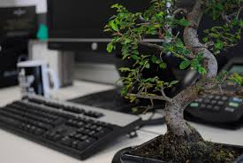 bonsai zen atmosphere computer desk keyboard mouse add bonsai office interior