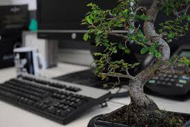 office bonsai. Bonsai Zen Atmosphere Computer Desk Keyboard Mouse Office 2