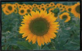 Реферат по геометрии Симметрия в природе Реферат Специфика строения растений и животных определяется особенностями среды обитания к которой они приспосабливаются особенностями их образа жизни