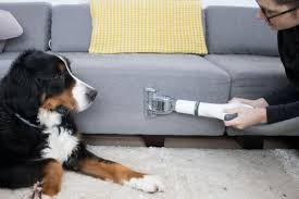 tips for a pet friendly home