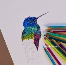 A Colored Pencil Blog Blog About Using Coloured Pencils