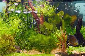 Light Requirement For Planted Aquarium Live Plants And Lighting In Aquariums