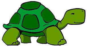 Image result for tortoise clipart