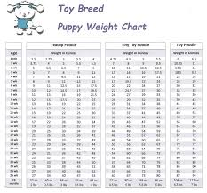 Toy Poodle Weight Chart 51 Logical Poodle Chart