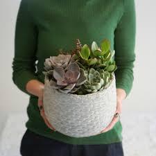 an indoor pot of plants
