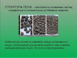 Реферат Почва ее состав и строение tat school ru Сайт  Реферат на тему структура почвы