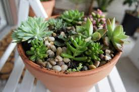 Taking care of your arrangement: Succulents love neglect, so it should be  fairly easy to keep them alive. Water light to moderately and protect them  from ...