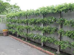 Creative Live Fence Plants Ideas - to block street view
