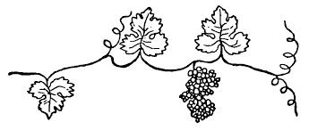 Imprimer Nature Fruits Raisin Num Ro 755937