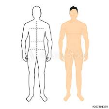 Man Anatomy Silhouette Size Human Body Full Measure Male