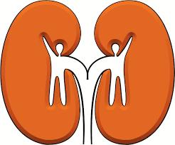 Resultat d'imatges de malaltia renal cronica
