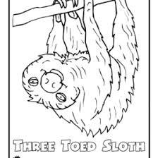 Small Picture Preschool Coloring Pages Jungle Animals Archives Mente Beta Most