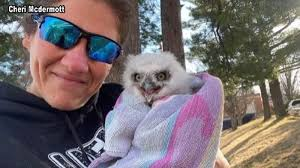 Baby owl rescued in Poultney