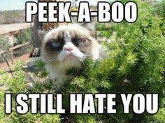 Sad cat | I like what you did there | Pinterest | Sad Cat, Cat ... via Relatably.com