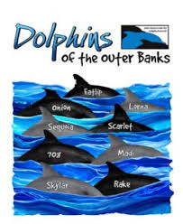 looking for the perfect gift for birthdays anniversaries or another special occasion our adopt a dolphin kits and t shirts make great presents while