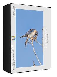 American Kestrel Falco Sparverius 10467137 Framed Photos Wall Art