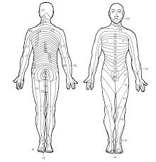 Dermatome Distribution Chart Epidural Dermatome Chart Www Bedowntowndaytona Com