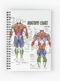 Anatomy Chart Muscle Diagram Spiral Notebook